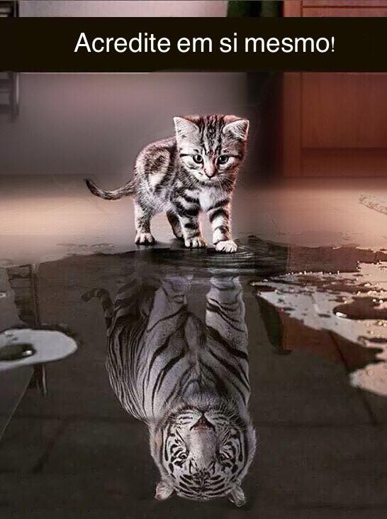 Acreditar em si, desperte o tigre em você!